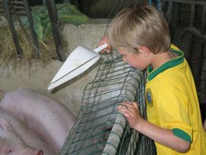 Rasmus fodrer grise