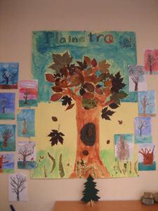 Plaine-træet